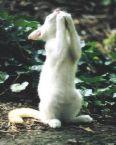 kucing-berdoa